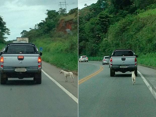 Cachorro foi abandonado na Br-101 e correu atrás do dono por vários quilômetros (Foto: Rafaela Santuzzi)