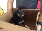 Animais resgatados das ruas poderão ser adotados em feira no AP
