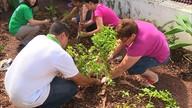 Postos de saúde implantam hortas comunitárias em Florianópolis (Reprodução/RBS TV)