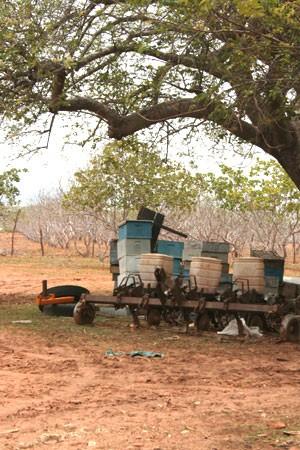 Muitos apicultores do RN estão com a produção prejudicada pela seca (Foto: Rafael Barbosa/G1)