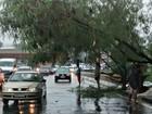 Em 3 horas, Inmet registra mais de 80 milímetros de chuva em Manaus