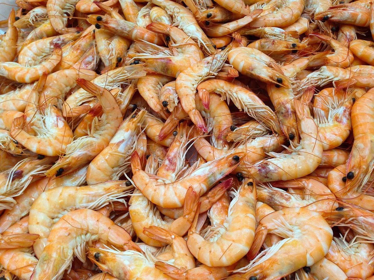 camarao-crustaceos (Foto: Creative Commons/Jacqueline Macou)