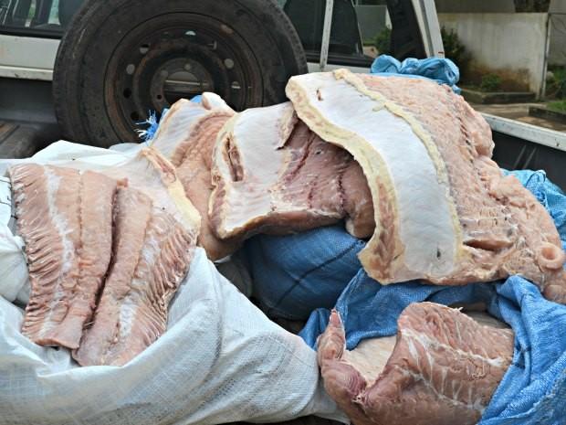 Os 520 quilos de pirarucu foram distribuídos a instituições filantrópicas (Foto: Rosiane Vargas/G1)