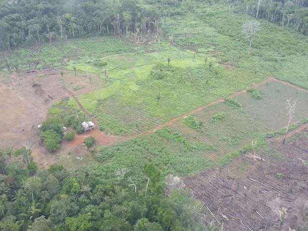 Cerca de 40 focos foram constatados, mas 13 são considerados os maiores, acima de seis hectares (Foto: Dayanne Saldanha/G1)