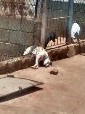 Cão encontrado morto após enchente em Matão (Foto: Reprodução/Facebook)
