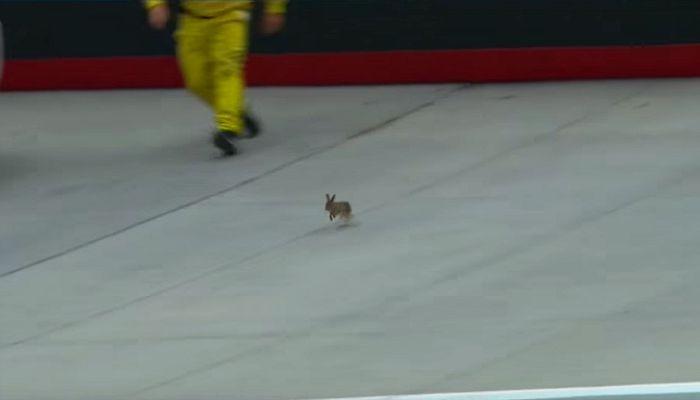 BLOG: Um coelho no circuito oval...