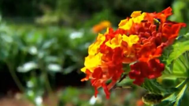 Estação das flores segue até o dia 21 de dezembro (Foto: Reprodução TV TEM)