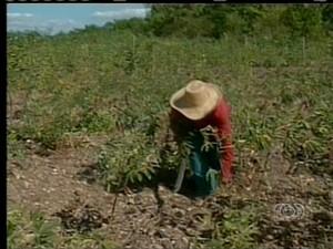 O produtor Jose reclama de falta de apoio no setor agricola (Foto: Reprodução/TV Anhanguera TO)