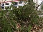 Vendaval deixa casas sem energia e derruba árvores em Curitiba e região