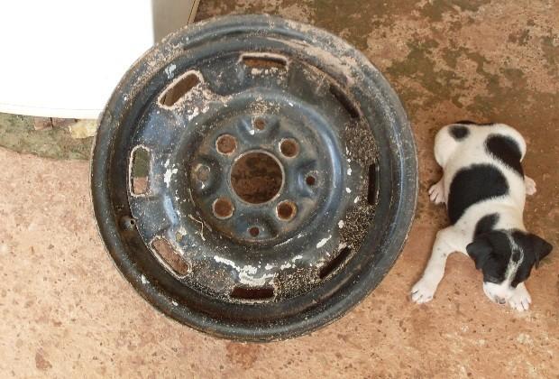 Após o resgate, cadelinha recebeu nome de Vitória (Foto: Divulgação/ Corpo de Bombeiros)