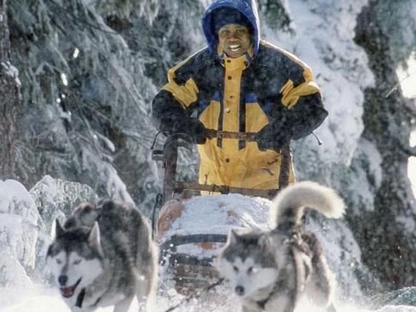 Dentista ganha oito cães como herança e decide treiná-los para competição (Foto: Divulgação / Reprodução)
