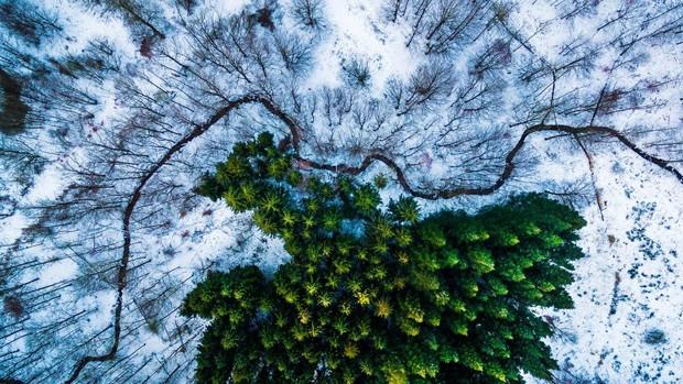 Esta foto tirada por Michael Bernholdt Rasmussen na Dinamarca venceu na categoria 'Natureza e Vida Selvagem' (Foto: Michael Bernholdt Rasmussen)