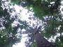 O que é que Curitiba tem? Belezas naturais! Venha conhecer novas áreas verdes na capital do Paraná