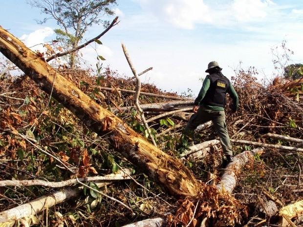 operação desmatamento Amazônia (Foto: Hebert Rondon/Ibama)