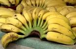Aprenda três receitas saborosas com banana > saiba mais
