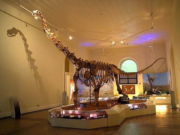Dinossauro do Museu Nacional, Rio de Janeiro: um dos lugares para se trabalhar e estudar paleontologia (Foto: Divulgação/Rafael de Moura)
