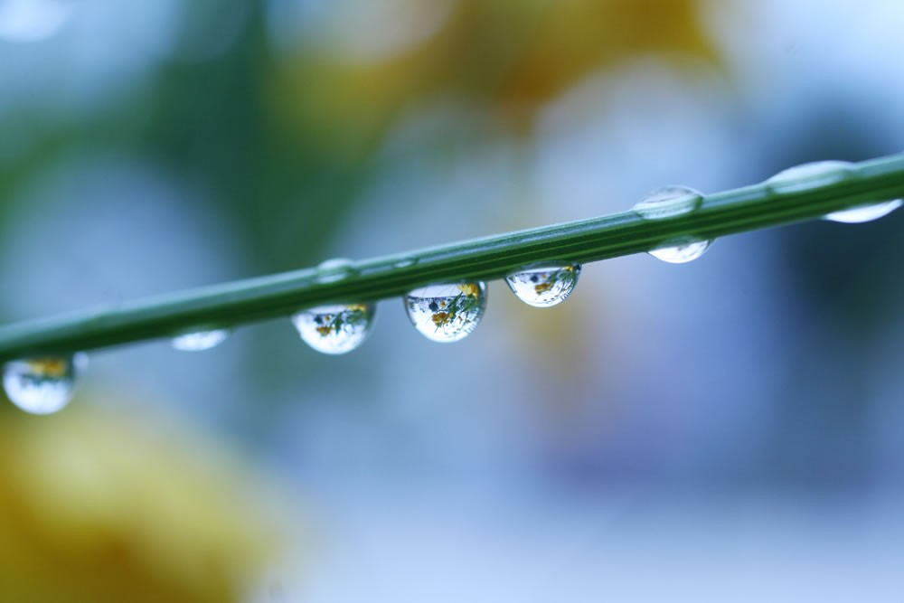 Regue as plantas quando não estiver muito quente (Foto: Fox キヨ/Flickr/Creative Commons)