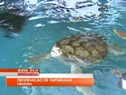 Aumenta número de tartarugas resgatadas em Ubatuba, SP