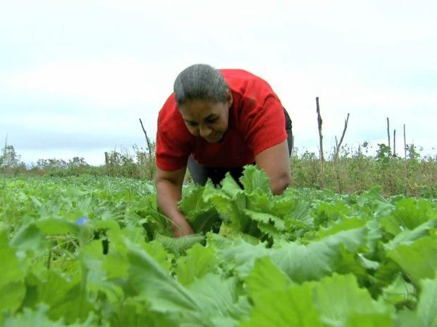 No assentamento Agroana, os produtos agora não têm agrotóxicos ou adubos químicos (Foto: Reprodução/TVCA)