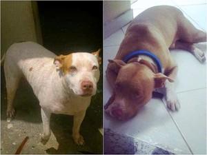 Marrento e Belinha foram atingidos com vários golpes de facão em Manaus (Foto: Arquivo Pessoal)
