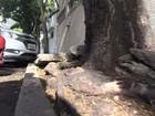 Buracos e rachaduras tomam as calçadas no Centro de Vitória