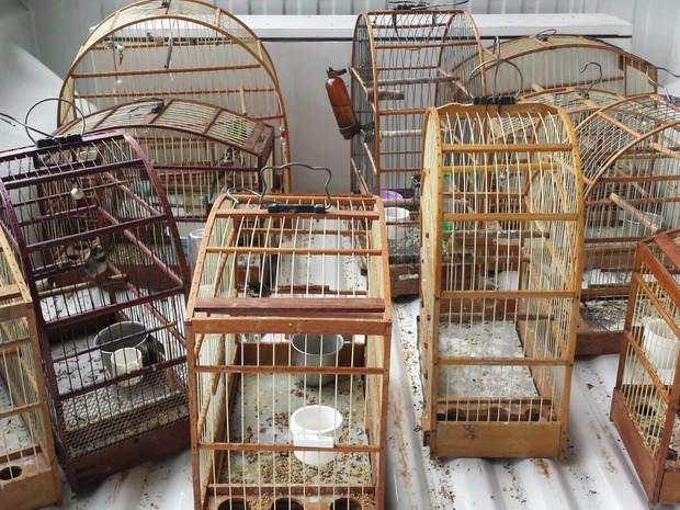 Aves silvestres são apreendidas em casa de suspeito em Americana (SP) (Foto: Guarda Civil Municipal de Americana)