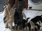 Moradora é multada após vizinho reclamar do barulho de animais