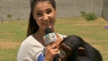 Luciana Martins visita o Santuário dos Primatas em Sorocaba (Foto: Reprodução / TV TEM)