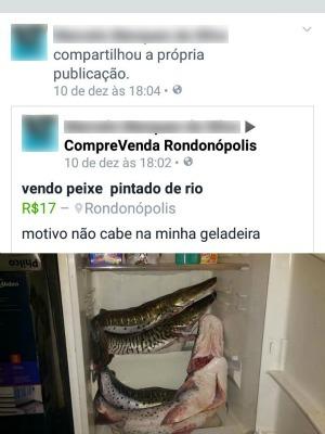 Vendedor diz que motivo da venda é por não caber na geladeira (Foto: Divulgação/ PM-MT)