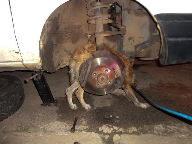 Operação de resgate resgata cachorro preso em carro em São Carlos (Foto: Thiago Caporasso)