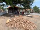 Mirante Rural destaca incentivo da produção do babaçu no Oeste do MA