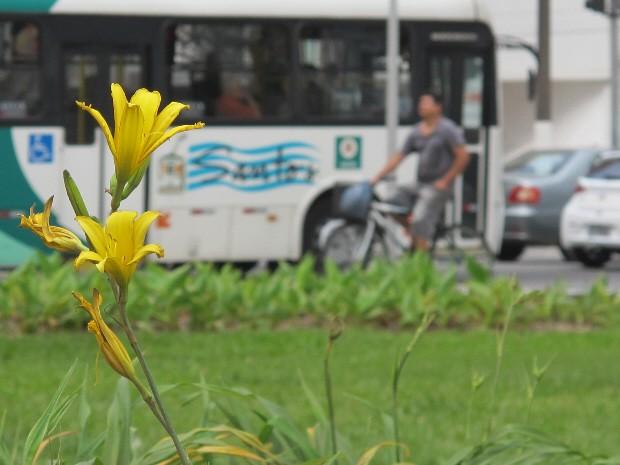 Flor amarela desabrochando no jardim de Santos, SP (Foto: Mariane Rossi/G1)