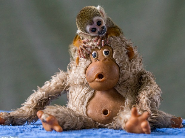 Campanha quer incentivar a doação de bichos de pelúcia a animais de verdade (Fot Diogo Lagroteria/ Ibama)