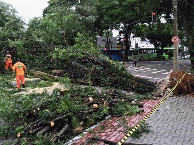 Quedas de árvores na região central de São José  (Foto: André Luis Rosa/TV Vanguarda)