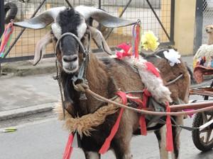 Animais participaram da Entrada dos Palmitos em Mogi das Cruzes. (Foto: Jenifer Carpani/G1)