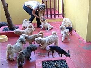 A maioria dos cachorros são fêmeas e estão prenhas (Foto: Reprodução/TV Integração)