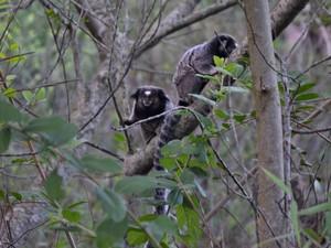 O loco é hábitat de diversos animais (Foto: Coletivo Cerrado)