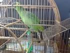 Doze pássaros silvestres são apreendidos em Serranópolis de MG