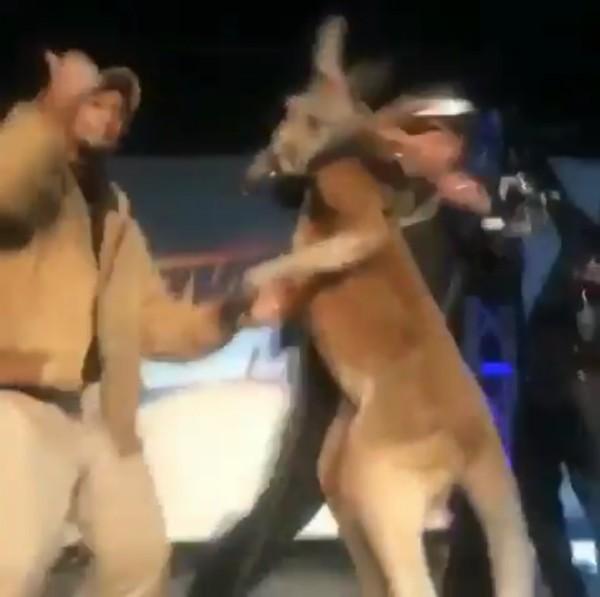 O instante no qual Mike Epp leva um soco do canguru levado por ele no palco de seu show (Foto: Reprodução)