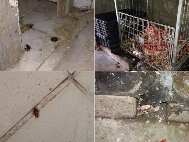 Supermercado tinha fezes, baratas e várias irregularidades sanitárias, em Aparecida de Goiânia, Goiás (Foto: Divulgação/Polícia Civil)