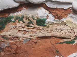 Fósseis foram encontrados em São João do Polêsine, no Centro do Rio Grande do Sul (Foto: Reprodução/RBS TV)