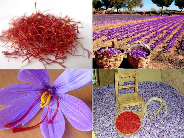 Para se obter um quilo de açafrão, cerca de 250 mil fores são plantadas (Foto: Divulgação e Flavio Flarys / G1)