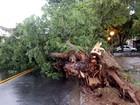 Chuva forte derruba árvores e causa prejuízos em Jacareí, SP