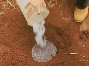 Hidrogel é aplicado na raiz dos pés de café para reter a água, Lavras, MG (Foto: Reprodução EPTV)