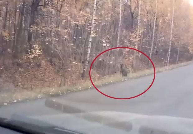 Motorista ficou surpreso ao se deparar com canguru ao lado de estrada na Rússia (Foto: Reprodução/YouTube/Ivan Zarubin)