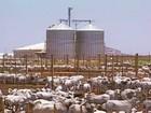 Criadores começam a investir no confinamento de gado na Bahia