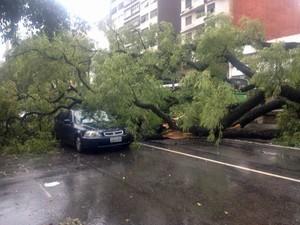Chuva derrubou árvore sobre carro em São Paulo (Foto: Márcio Pinho/G1)