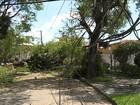 Zona Oeste de SP segue com árvores caídas quatro dias após temporal