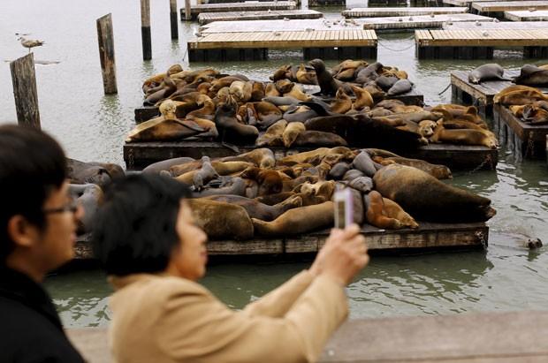 Mulher tira fotos de leões-marinhos em cais de San Francisco (Foto: Robert Galbraith/Reuters)