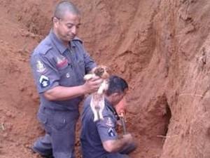 Resgate cachorro São José dos Campos (Foto: Ana Carolla / Vanguarda Repórter)